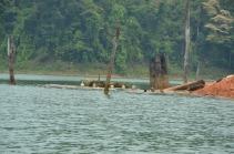 Lake Temengor