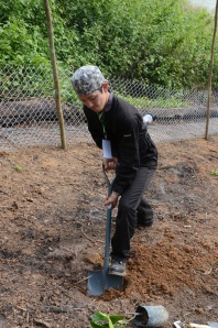 Naoki getting involved in Chuweh's community garden